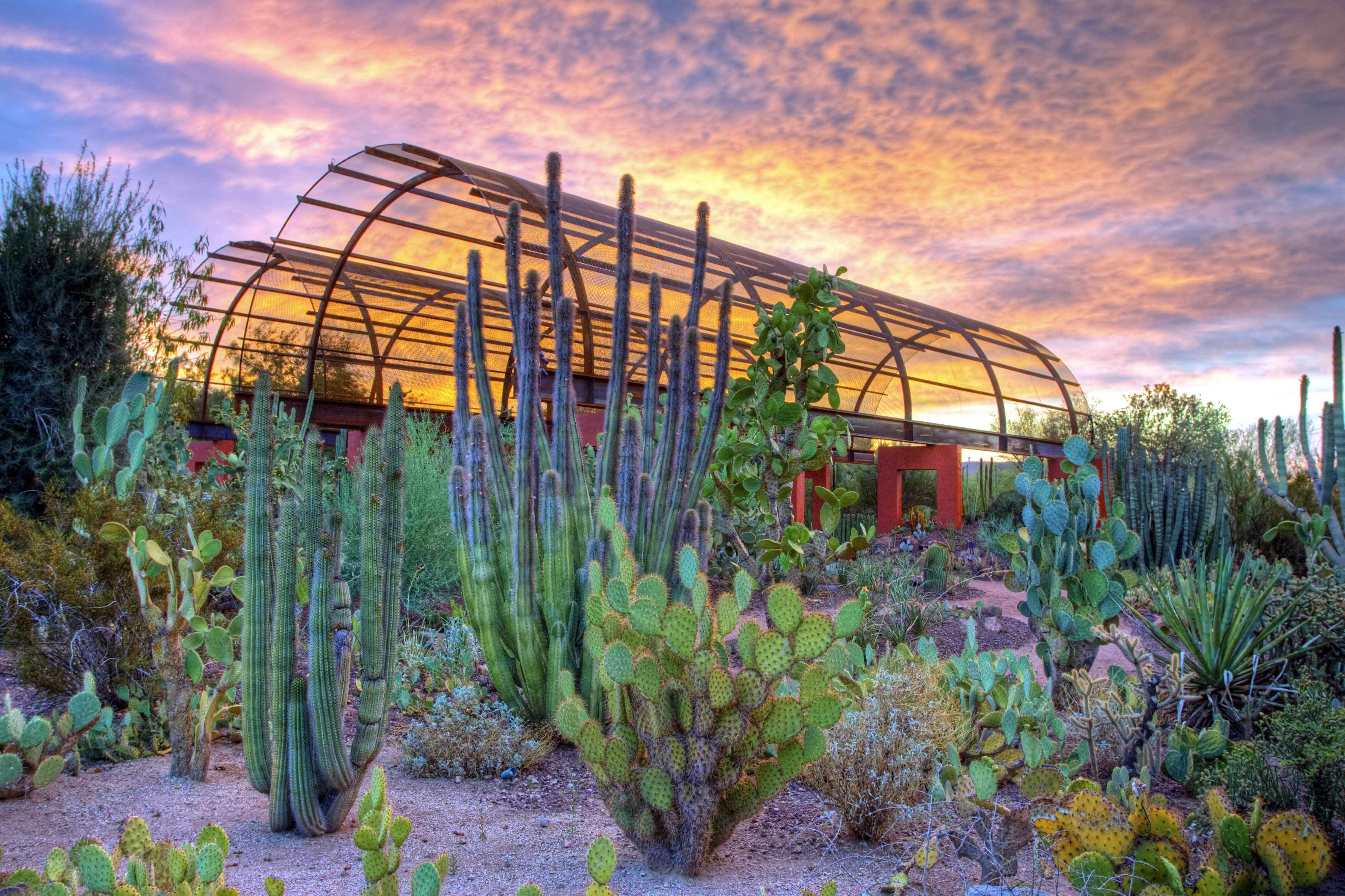 Five American Botanical Gardens To Dream About This Summer